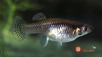 Photo of Posible primera especie de pez invasor en el Lago de Sanabria