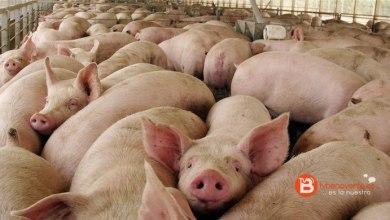 Photo of Los vecinos de Villafáfila se oponen a la macrogranja de porcino