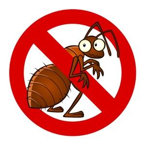 Receita caseira para combater formigas por Lúcia Schuller