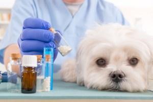 Homeopatia em animais por Dr. Marcos Fernandes