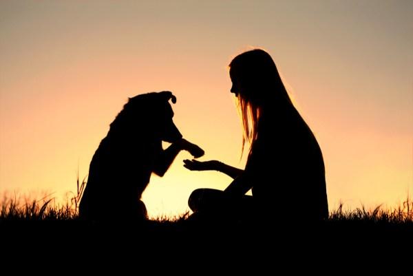 tv Catia Fonseca 5 dicas para adotar um animal de estimação Dra. Ana Carolina Teixeira Ibelli Cachorro e dona