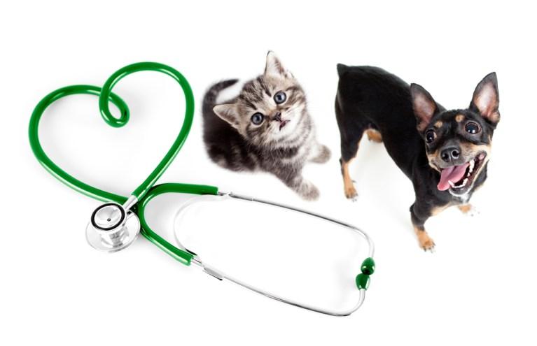 Doenças parasitárias de cães e gatos com Dr. Marcos Fernandes