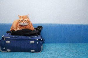 O que levar na mala dos pets quando for viajar? por Luiza Cervenka