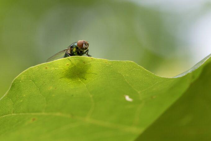 Como controlar as moscas por Lucia Schuller