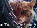 The Tigers of Scotland