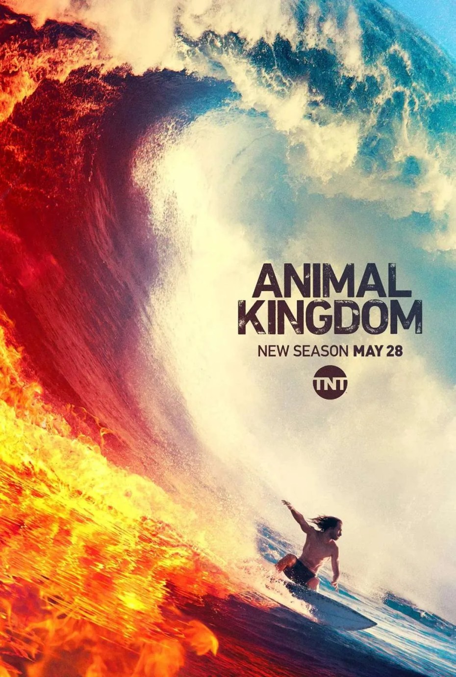 Animal Kingdom saison 4