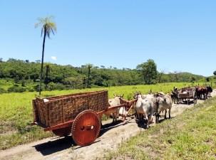 Tradição - Carro de boi