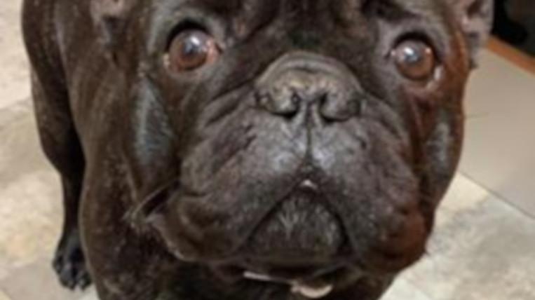 El Bracket, el gos robat a Sant Cugat, torna amb la seva família
