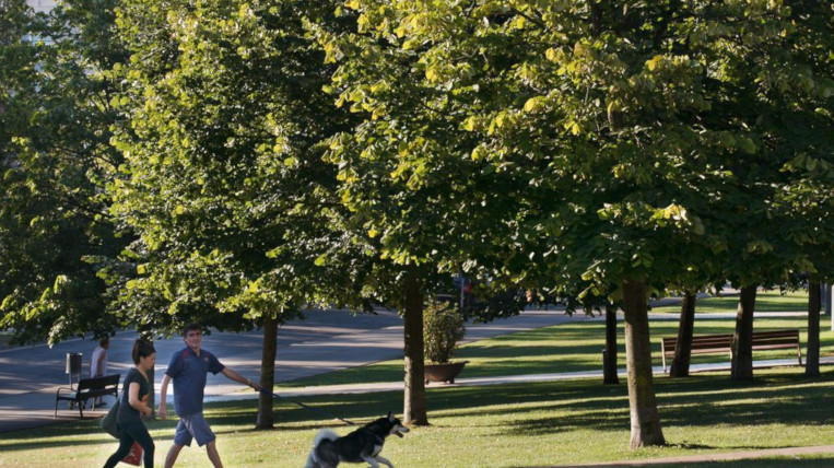 arbres-santcugat