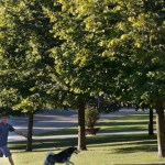 Prop d'un miler de nous arbres per millorar la qualitat de l'aire