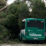 Un pi cau a sobre d'un autobús de l'EMD Valldoreix sense causar ferits