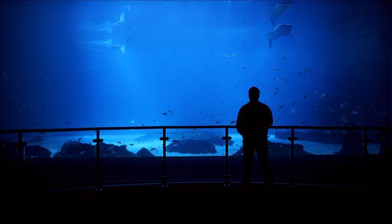 The GA Aquarium