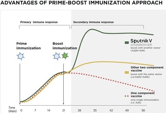 Sputnik Vaccine process, in Body, Effects, Efficacy