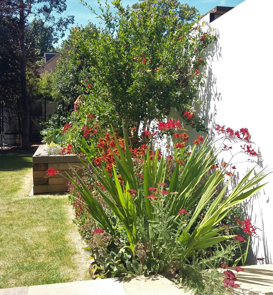 Hot bed in July with Punica Helenium and Crocosmia pic 02