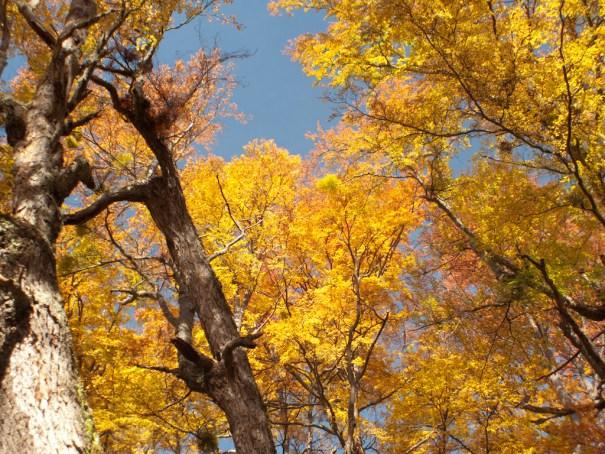 Autumn colours on Cerro Bandera by .