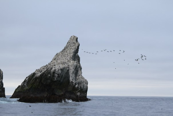 shags and shag rock by Christopher James Harris.