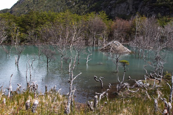 Beaver dam(age) new Caleta Olla, Tierra del Fuego by Christopher James Harris.
