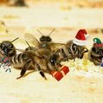 xmas bees