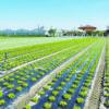 Impiego di bioteli in agricoltura biologica, firmato un protocollo