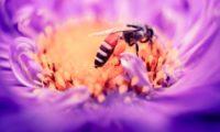 Collasso della biodiversità nel mondo, le Nazioni Unite lanciano un allarme