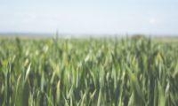 Tecnologie digitali nelle imprese agricole migliorano efficienza dei processi