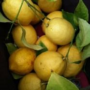 3. Day 11: Holy Spirit Makes Lemonade