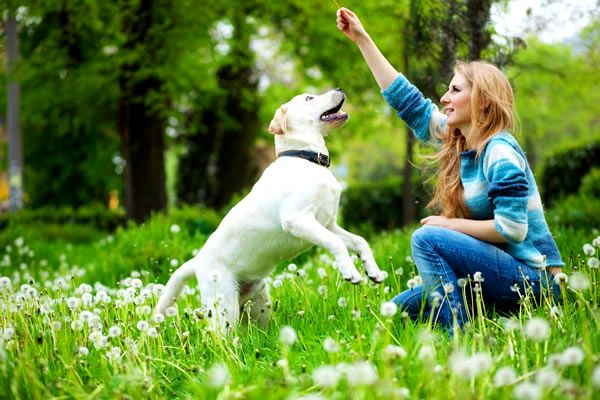 Well-Mannered Pets Are Lovable Pets