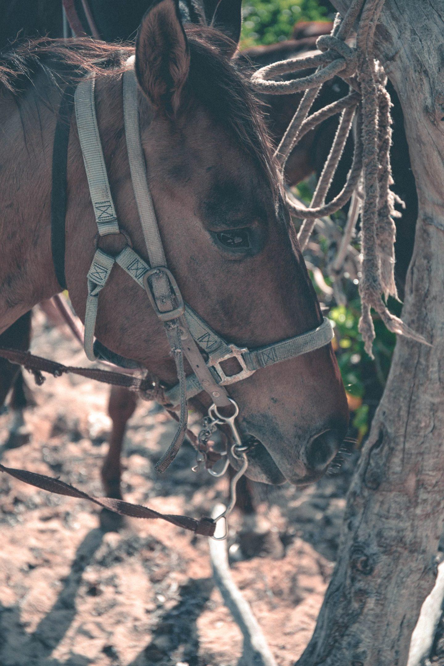 Horse Ride Beach Cayman Island