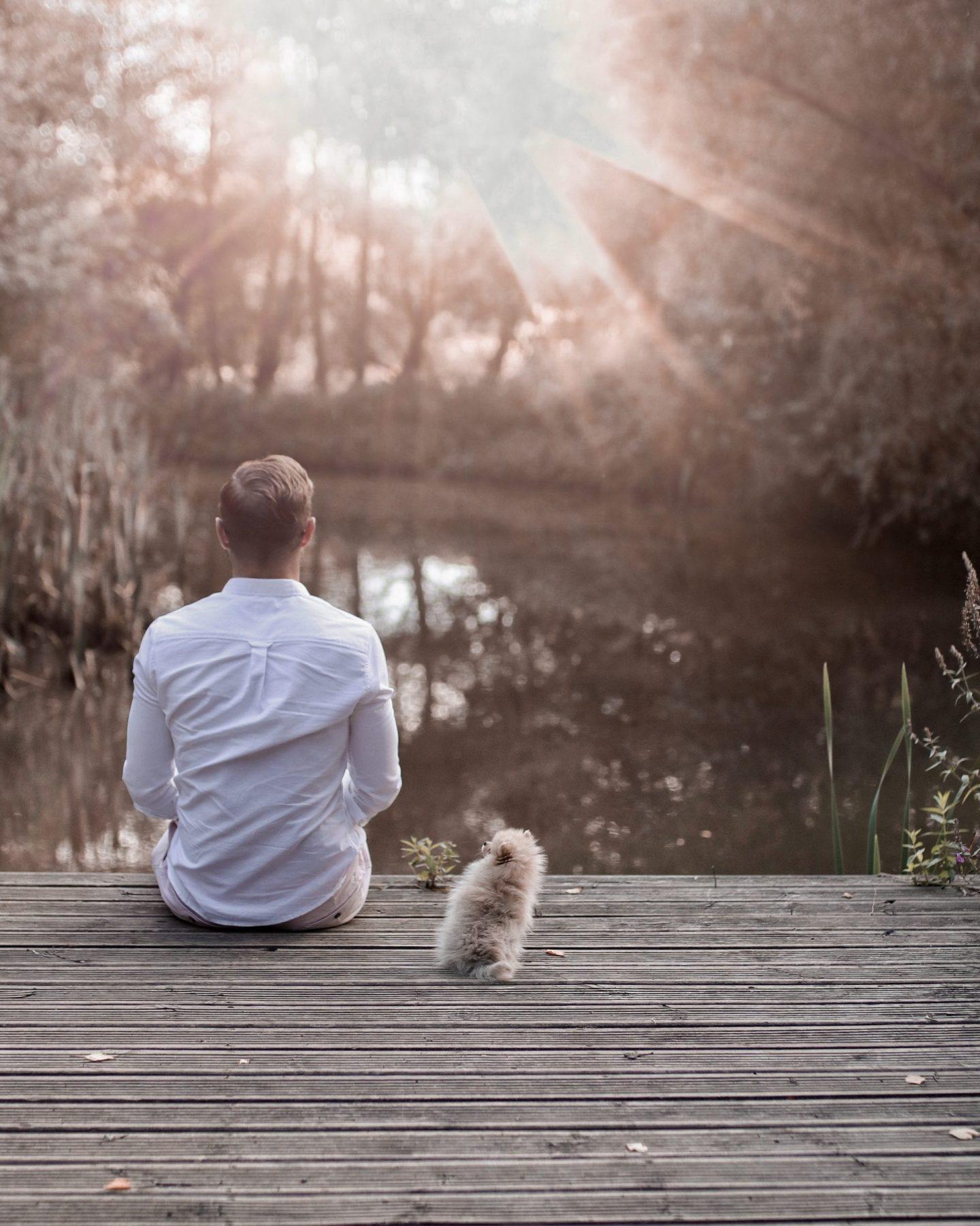 Piriteze Pet Allergy Twenty First Century Gent