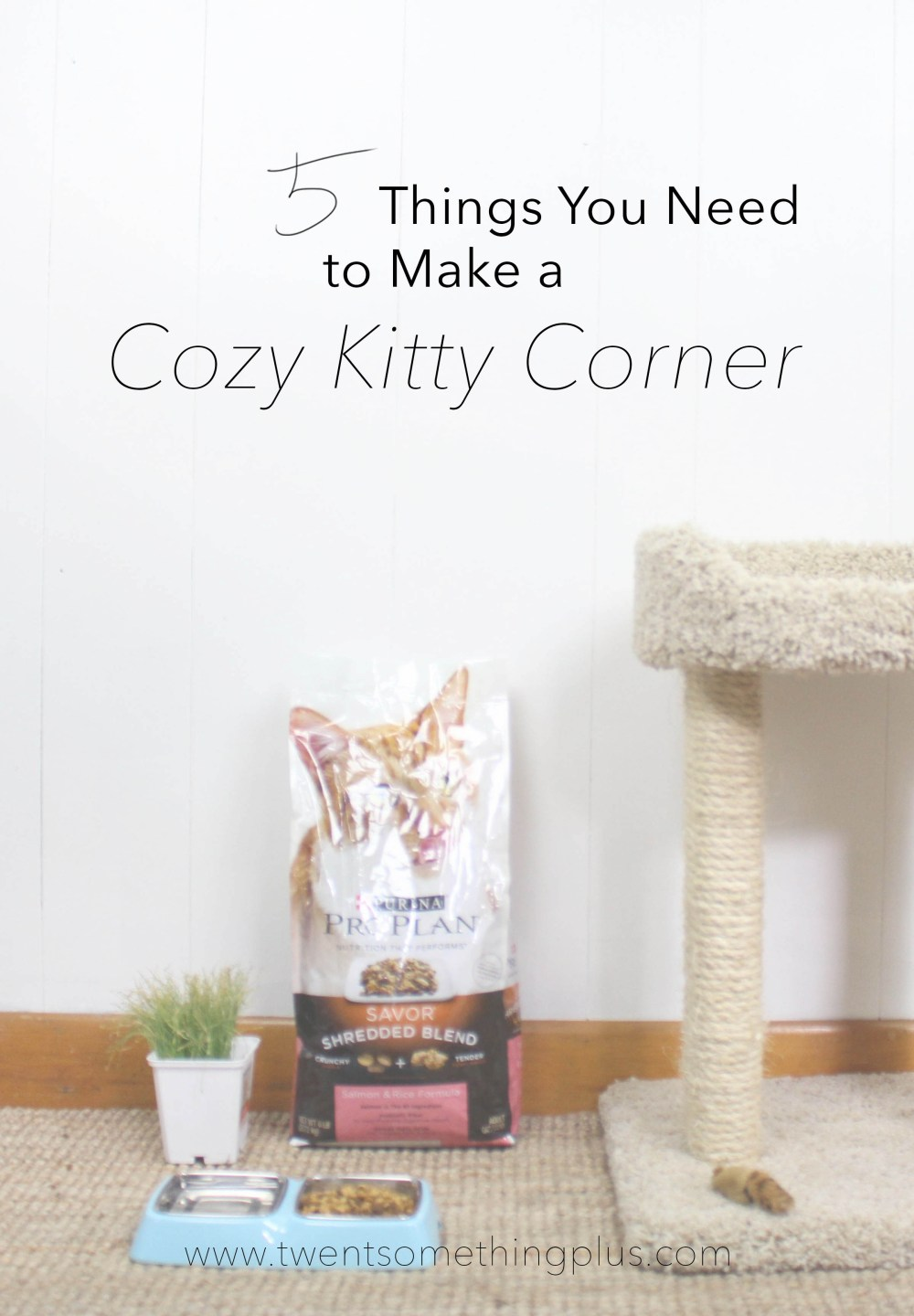 Cozy Kitty Corner