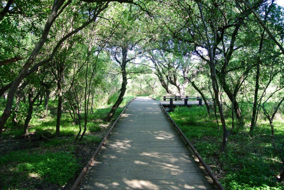 Phil Hardberger Park