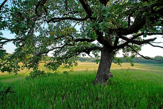 Hyland Lake Park Reserve in Bloomington. (Photo courtesy of Derek J. Dickinson/Three Rivers Park District)