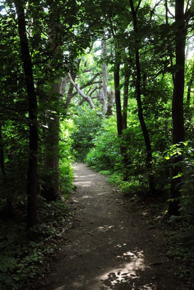 A pretty view of the Lilydale Park Brickyard Trail. (Pioneer Press archives: Chris Polydoroff)
