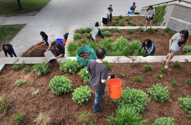 Environmental science students at Central High School in St. Paul plant flowers and install wood-chips in the tiered beds on the plaza in front of the school for the Transforming Central Project on Friday, May 20, 2016. (Pioneer Press: Jean Pieri)