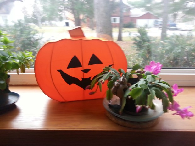 """Our flowers, ourselves ... VdHtsNana: """"My confused Christmas cactus blooms every year for Halloween and sometimes again at Easter — but not for Christmas."""""""