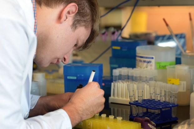 Mitch Kluesner, a senior at the University of Minnesota, works in a research laboratory at the University's Department of Pediatrics in Minneapolis on Monday, July 25, 2016. Kluesner is helping to find a cure for the rare form of bone cancer that killed one of his best friends, Zach Sobiech, three years ago. (Pioneer Press: Scott Takushi)