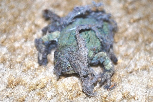 160918bbcut-frog1