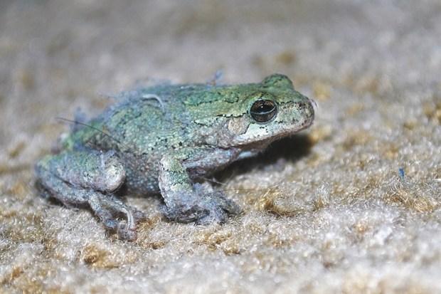 160918bbcut-frog2