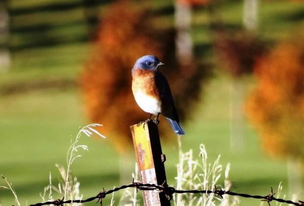161016bbcut-bluebird2