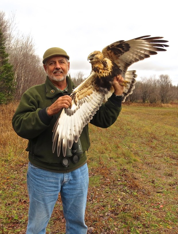 Frank Taylor, master bird bander, master falconer, and former curator at the University of Minnesota's Raptor Center, holds a young Rough-legged hawk before releasing it near the Knife River in northern Minnesota in 2015. (Photo courtesy Frank Taylor)
