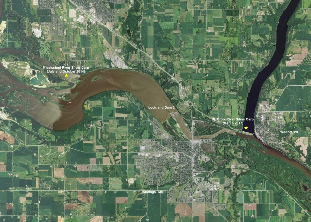 An image provided by the Minnesota DNR on Thursday, March 16, 2017, shows where silver carp have been captured. Image courtesy Minnesota Department of Natural Resources
