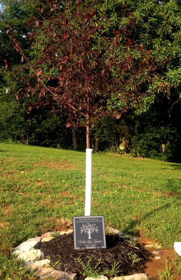 Minnesota Vikings head coach Mike Zimmer planted this crab apple tree on his 176-acre property in Walton, Ky., in memory of his late wife, Vikki, who died unexpectedly in 2009. July 11, 2017 photo. (Brian Murphy / Pioneer Press)