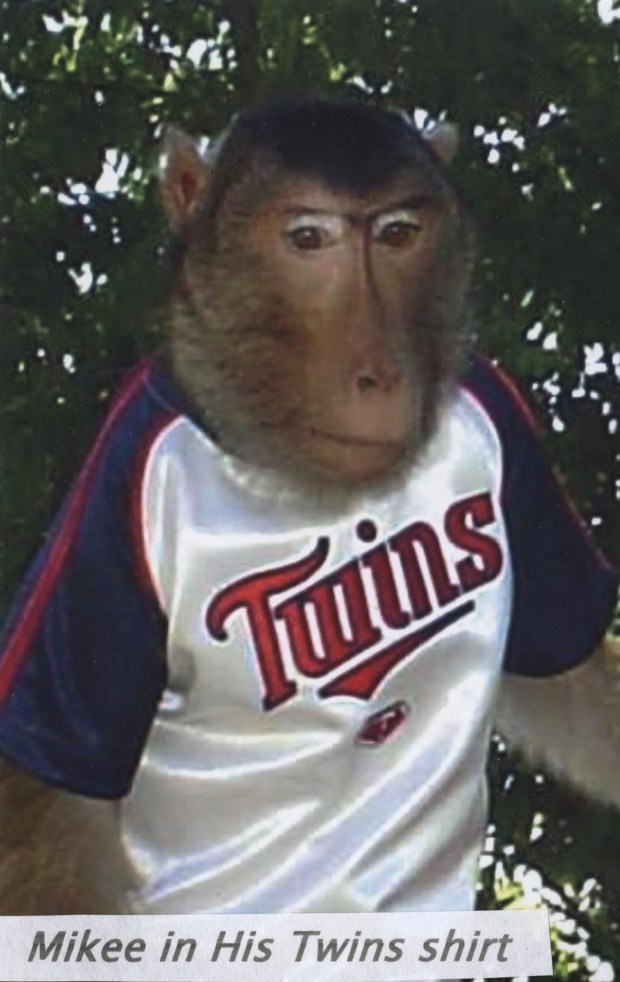 Mikee in an undated photo wearing a Twins shirt. He preferred silky material, Roy Carlson said. (Photo courtesy Roy Carlson)