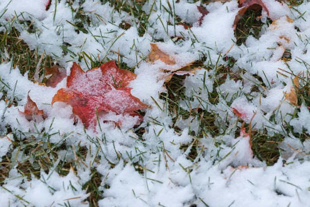 The first snowflakes of the year cover up freshly fallen leaves on the lawn of the Minnesota History Center in St. Paul on October 27, 2017. (Matthew Weber / Pioneer Press)