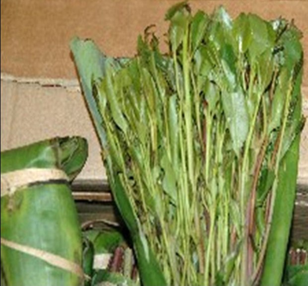 Authorities seize 69 pounds of khat bound for Minnesota