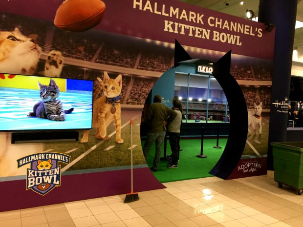 Hallmark Channel's Kitten Bowl is on display -- with REAL KITTENS -- in the Dayton's Project building at Seventh and Nicollet during Super Bowl Live on Friday, Jan. 26, 2018. (Kathy Berdan / Pioneer Press)