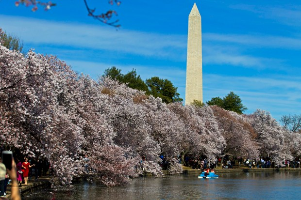 People walk along the Tidal Basin, visiting the cherry blossoms in Washington. (AP Photo/Jose Luis Magana, File)