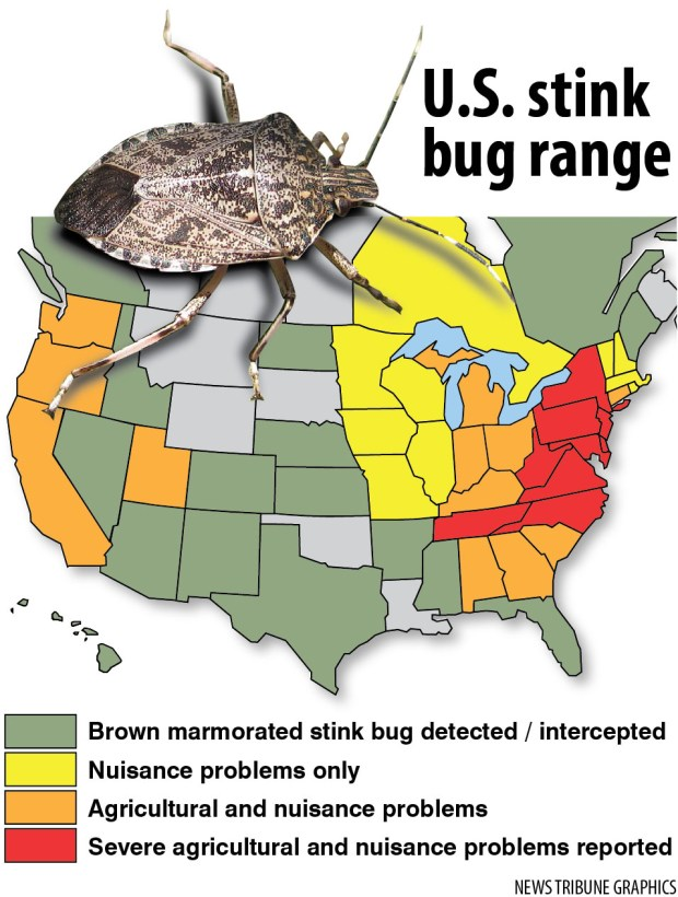 stink bug marmorated range