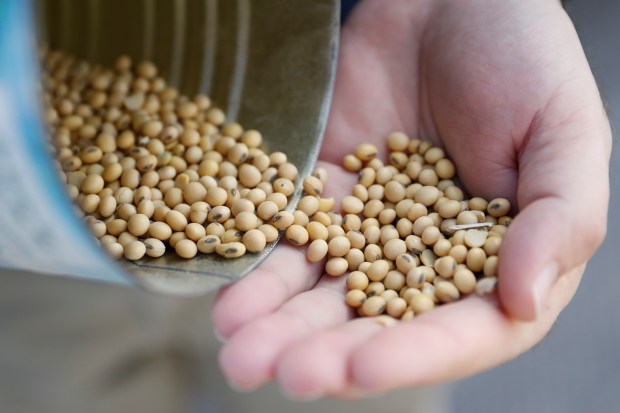 Matt Aultman, a grain salesman and feed nutritionist with Keller Grain & Feed, Inc., shows locally grown soybeans during an interview at their facilities in Greenville, Ohio, Thursday, April 5, 2018. Rural America is struggling under a cloud of uncertainty as the Trump administration escalates a trade dispute with China. The Republican president says he's simply fighting against unfair business practices with a geopolitical rival. But voters in rural America, those who fueled his 2016 presidential victory, say Trump's moves are threatening their livelihoods and forcing some to re-think their politics. (AP Photo/John Minchillo)