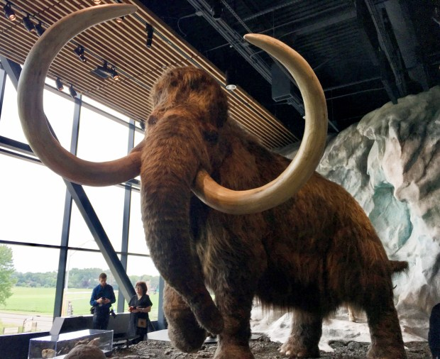 The public will be able to visit this woolly mammoth -- created by Blue Rhino Studio -- when the new Bell Museum, Minnesota's natural history museum, opens on the University of Minnesota St. Paul campus in Falcon Heights n mid-July.